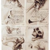 Estudid'anatomia