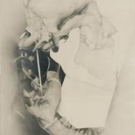 Composició amb crani II