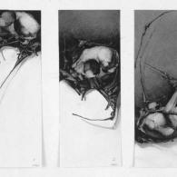 Composició amb crani